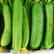 Cucumber Beth Alpha - 80 seeds